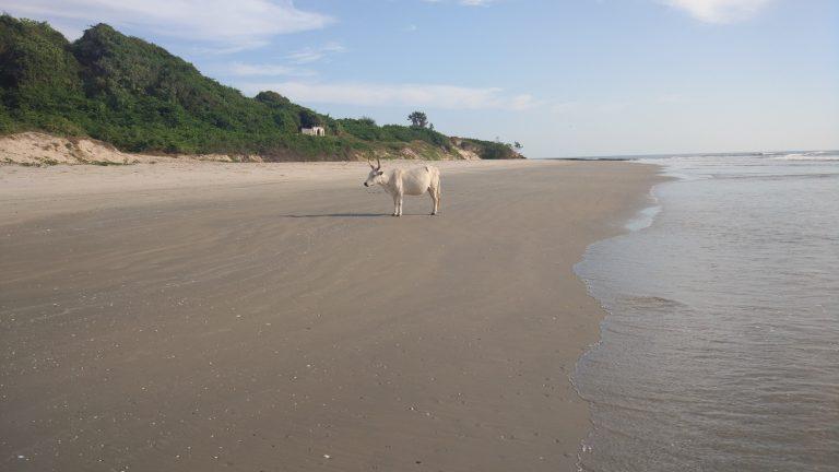 Correr por la playa y encontrarte esto...